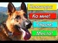 """#Дрессировка: команды """"Ко мне!"""", """"Рядом!"""",""""Место!"""""""