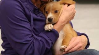Dog Training: Therapy Dog Training