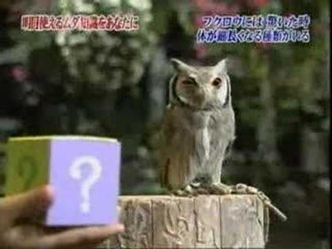 貓頭鷹被嚇到的反應,也太好笑了!