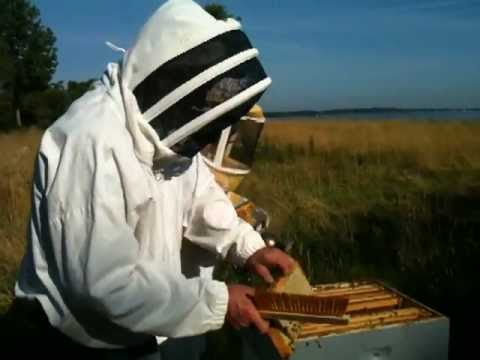 Harvesting Honey Video (My First Honey Harvest)