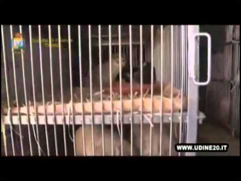 PRENDE IL VIA LA NUOVA CAMPAGNA EUROGROUP FOR ANIMALS CONTRO IL TRAFFICO DI ANIMALI D'AFFEZIONE