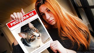 nosso gato desapareceu é sério