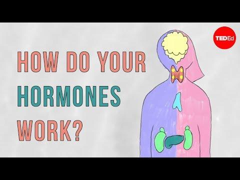 This is How Hormones Work