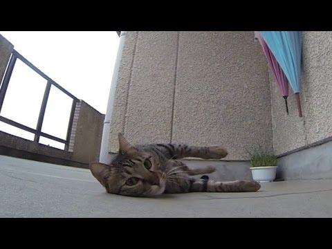 跳跳貓愛地板!