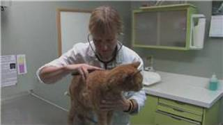 Cat Health : Signs Of Liver Problems In Cats