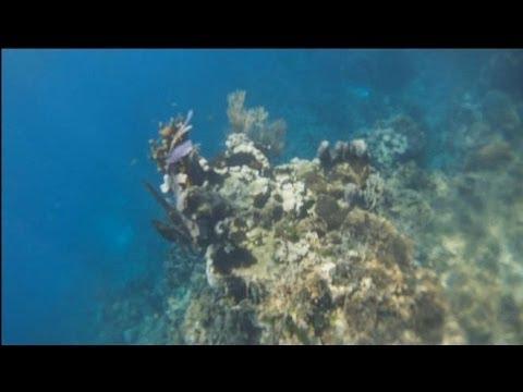 Snorkeling Honduras, Maya Key