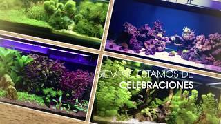 Te mostramos un pequeño repaso por algunos de los más bonitos acuarios de nuestro foro...Hemos llegado a la cifra de 1.000 acuarios presentados y para esta ocasión sorteamos un vale de 20€ entre todos los usuarios que actualicen la ficha de su acuario y suban al menos una foto.¿Te lo vas a perder?Entérate de como participar en: https://goo.gl/mSkBKj