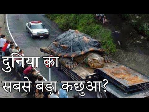 दुनिया का सबसे बड़ा कछुआ ?  | Largest Tortoise In The World ? Hoax Or Real Episode 5