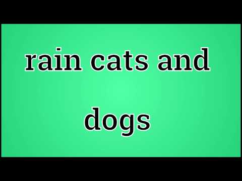What Rain Cats And Dogs Means