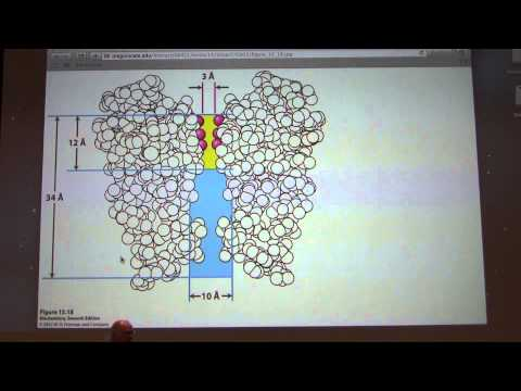 31.  Kevin Ahern's Biochemistry - Membrane Transport and Mitochondria