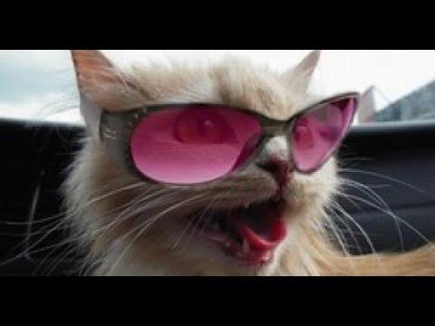 Снимите розовые очки 2 или как найти работу сиделкой на севере италии.