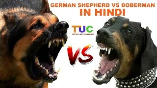 Download Lagu German Shepherd Vs Doberman In Hindi | Dog Comparison | The Ultimate Channel Mp3
