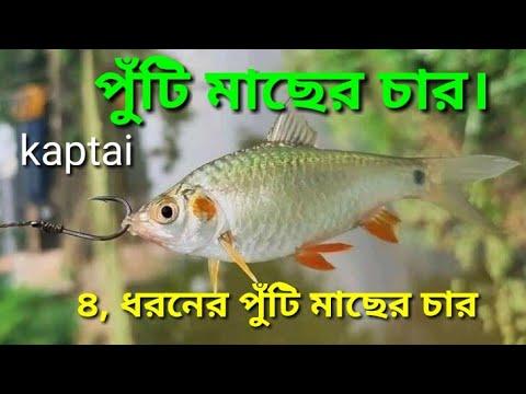 পুঁটি মাছের চার । How to make puti fish bait. Kornofuli Hook Fishing puti machar char