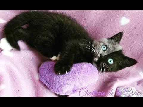 """Ten kot urodził się z """"dwiema twarzami"""". Posiada dwa typy DNA! Zobacz jak wygląda."""