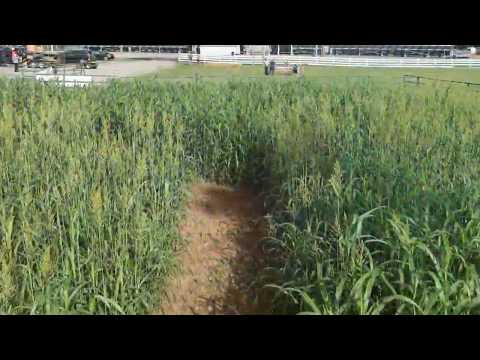 Video: Corn Maze at the Wilson County Fairgrounds