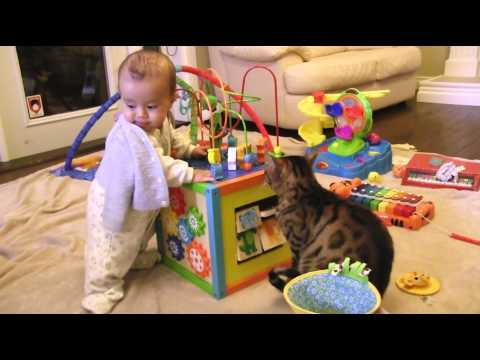 Cat Toys & Baby Toys… The Same Thing… Linus Cat Tips