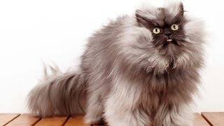 Funny Cats Video Funny Animals And Funny Pets