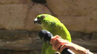 Meet Groucho the singing parrot at Disney's Animal Kingdom