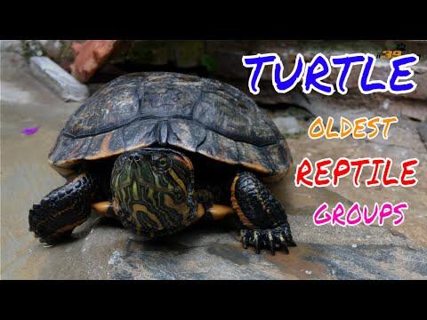 Con Rùa Nước - Live Dictionary