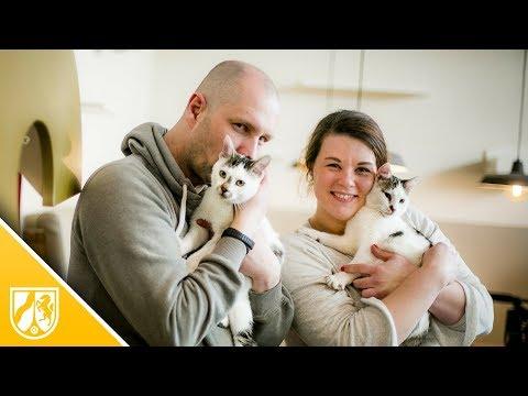 Düsseldorf: Hier ziehen die Katzen ins Katzencafé  ...