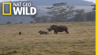 Rhino Mom Teaches Hungry Hyenas Not to Mess With Her Calf | Nat Geo Wild by Nat Geo WILD