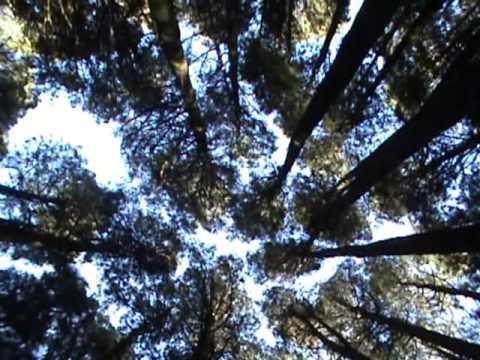 New Zealand native trees
