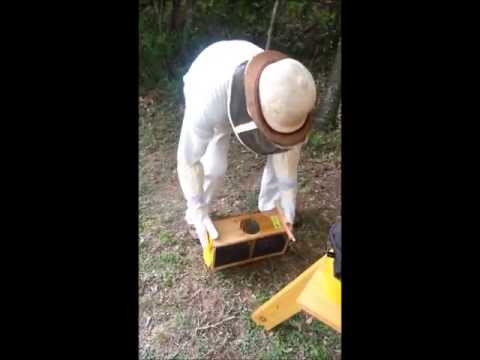 Beekeeping for Beginners by Beginners – Adding Bees to a Top-Bar Hive