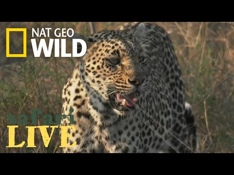 Safari Live - Day 47 | Nat Geo WILD