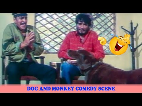 Video Dog and Monkey Comedy Scene | Kundan Movie download in MP3, 3GP, MP4, WEBM, AVI, FLV January 2017