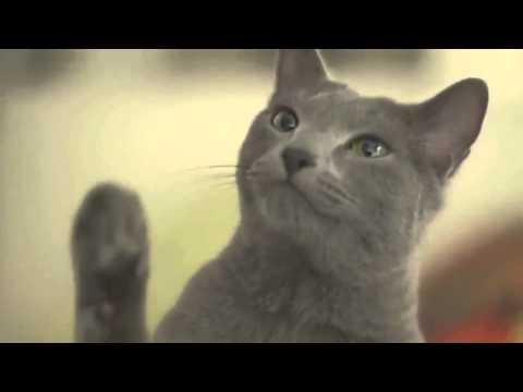 scoperto perché il gatto ci ignora quando lo chiamiamo