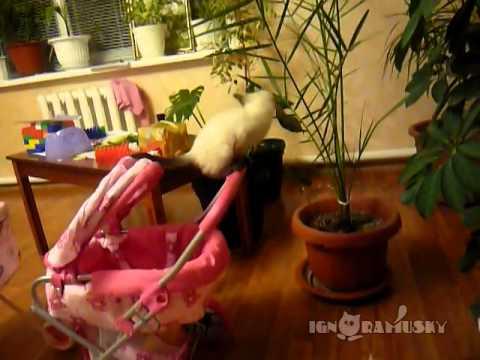 un gatto e il suo modo assurdo di giocare!