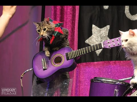 Watch a Rock Band Made of Cats