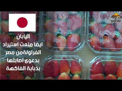 شاهد.. لماذا أوقفت 5 دول استيراد الأغذية من مصر