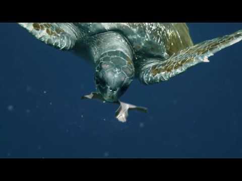 他把「啤酒上方的包裝丟進海裡」時大家正想痛罵破壞環境,但看到海龜靠近它的反應就傻傻地瞪大眼睛!