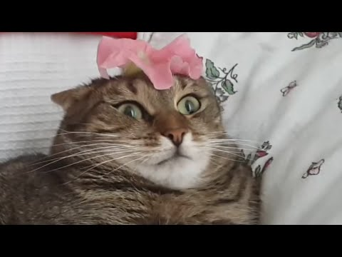 Cat Can't Handle Flower