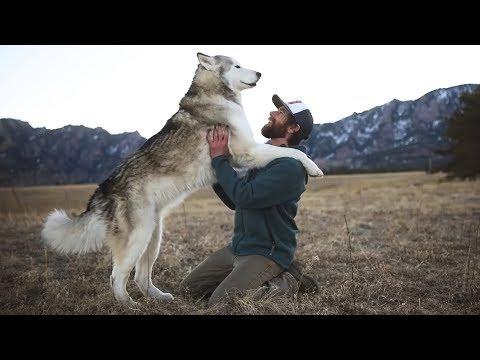 Wenn ein Wolfshund und ein Mensch zusammen treffen pa ...
