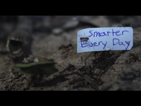 How to get Ants to carry a sign – Smarter Every Day 92