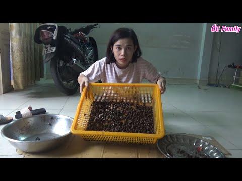 Cách giữ cho ốc dừa sống lâu tươi ngon