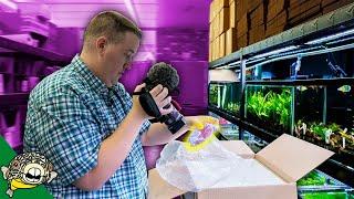 Exotic Fish Unboxing. Plecos, Apistos, Rasboras, Nano Fish and more! by Aquarium Co-Op