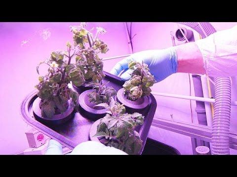 Καλλιέργεια τροφίμων στο διάστημα: Φαντασία ή πραγματικότητα; – space