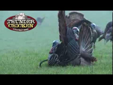 Thunder Chicken Turkey Trance