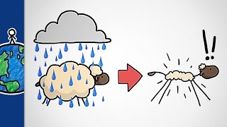 Why Don't Sheep Shrink In The Rain?