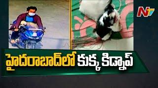 హైదరాబాద్ లో జాతి కుక్క కిడ్నాప్ కలకలం | Dog Goes Missing In Hyderabad |