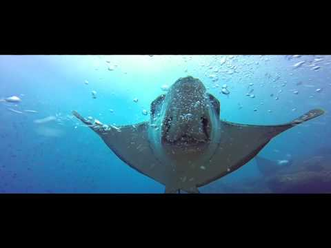 Video Ministerio del Ambiente Ecuaodor