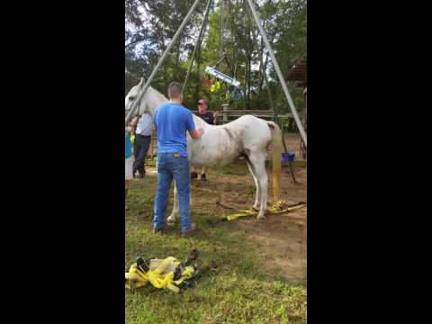 Panhandle Equine Rescue,  Sky is up!