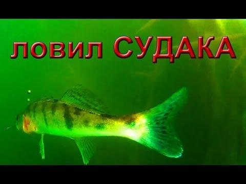 """Искусство Джиговой Ловли Судака. """"О Рыбалке Всерьез""""."""