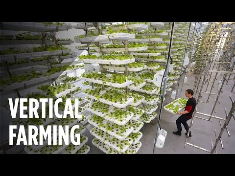 This Farm of the Future Uses No Soil and 95 Less