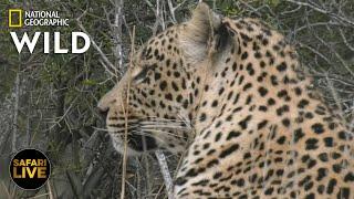 Safari Live - Day 378 | Nat Geo Wild by Nat Geo WILD