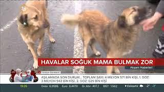 Soğuk Hava Koşullarında Sokak Hayvanlarına Mama Dağıtımı - 24 Tv