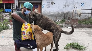 Mars helps animals around the world by The Humane Society of the United States
